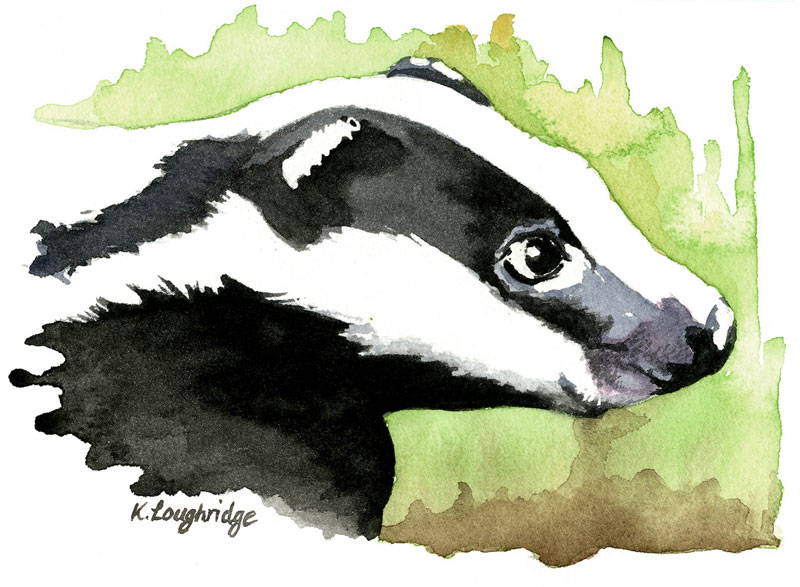 © KLArt.co.uk Brock Badger