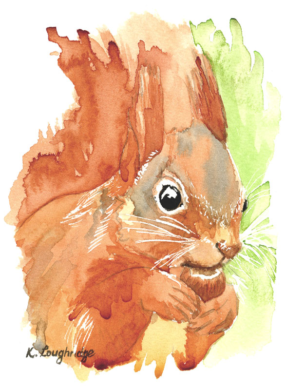 © KLArt.co.uk Shadow Tail Red Squirrel