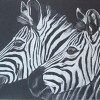 Picture of 2 Zebra Heads