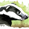 Brock Badger Watercolour Image