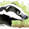 Brock Badger Watercolour Image