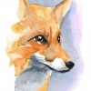 Foxy watercolour image