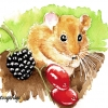 Hazel Dormouse Watercolour image