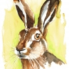 Mr Hare Watercolour image