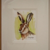 Image of Mr Hare Print